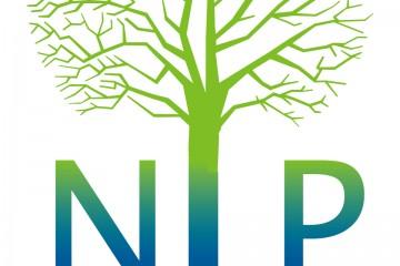 מה זה nlp ולמה הלכתי ללמוד את זה?