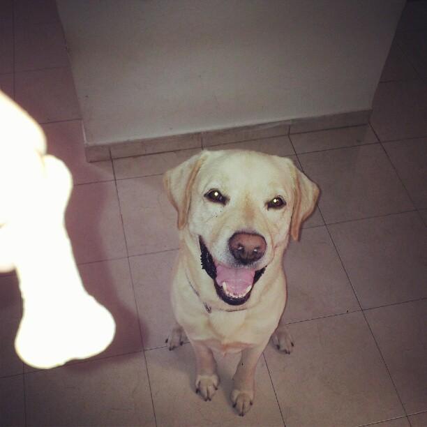 הכלב של צחייקוב