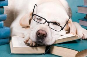כלב ישן | גל צחייק